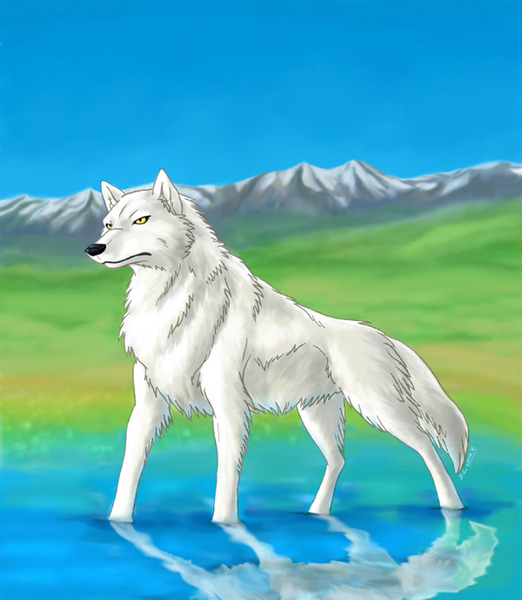 Wolf pics cause im bored :D: Anime Wolf